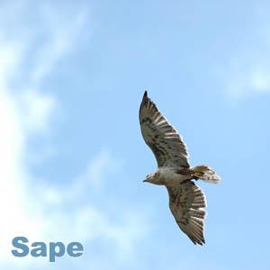 Птица сапа