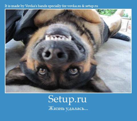 Жизнь с setup.ru удалась!