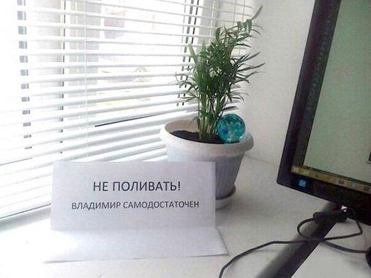 Цветок Владимир