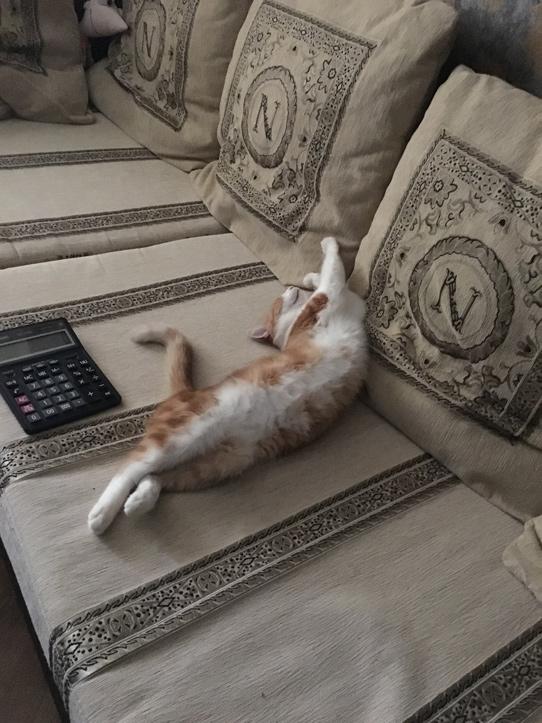 Кот продолжал наглеть...